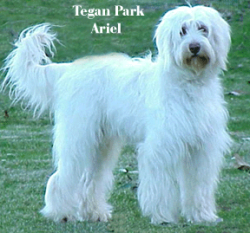 Tegan Park Ariel Photo 1