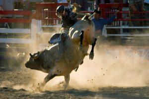 rodeo-300x200