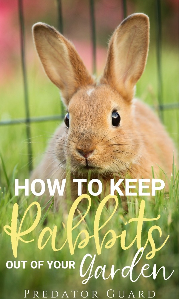 How-To-Keep-Rabbits-Out-of-Your-Garden