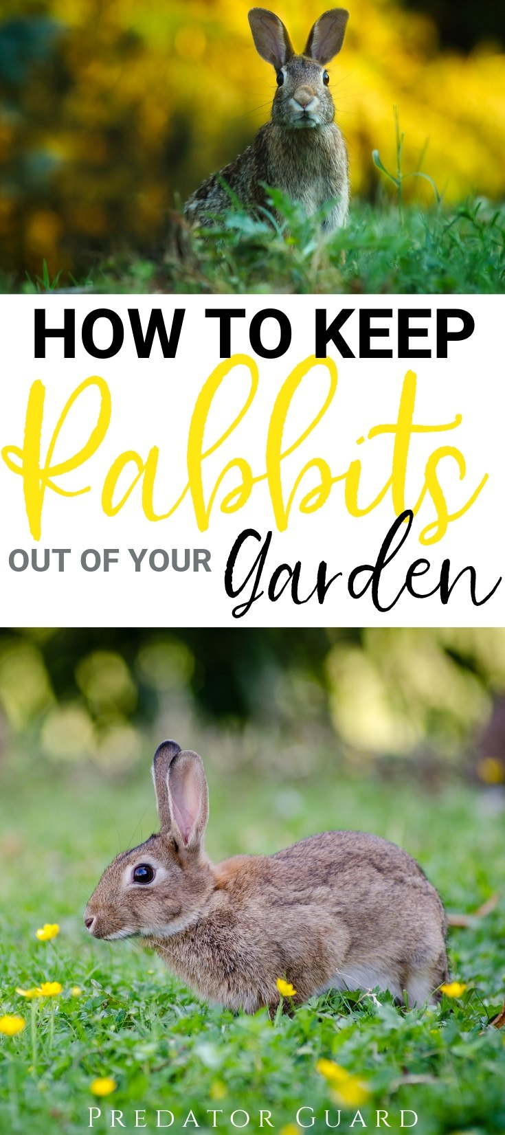 How-To-Keep-Rabbits-Out-of-Garden