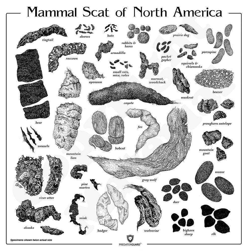 Mammal-Scat