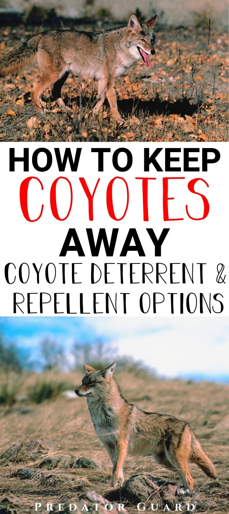 How-To-Keep-Coyotes-Away-1