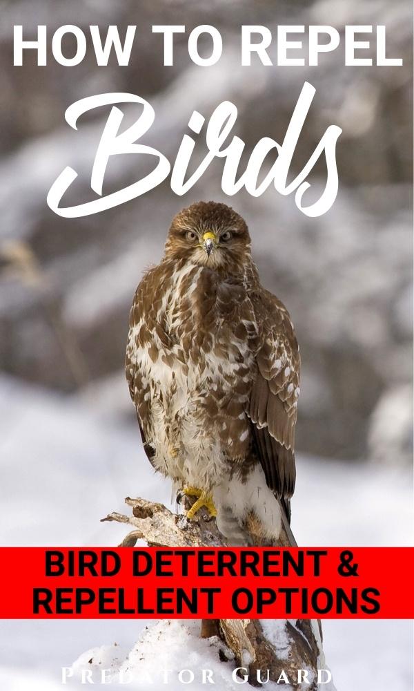 How to Repel Birds: Bird Repellent and