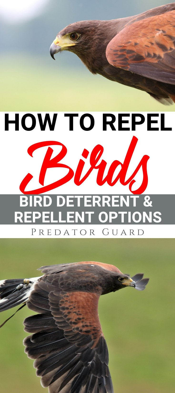 How-To-Repel-Birds-Bird-Deterrent-and-Repellent-Options-3