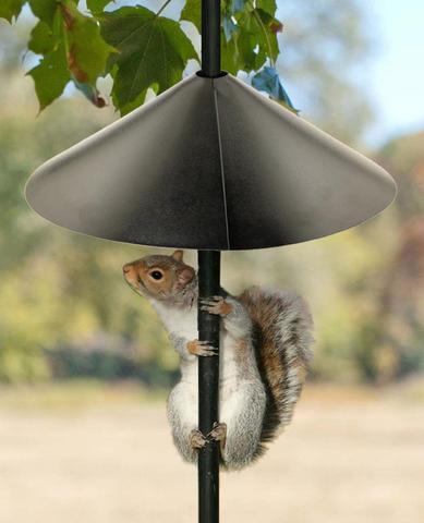 squirrel-baffle-crop_large