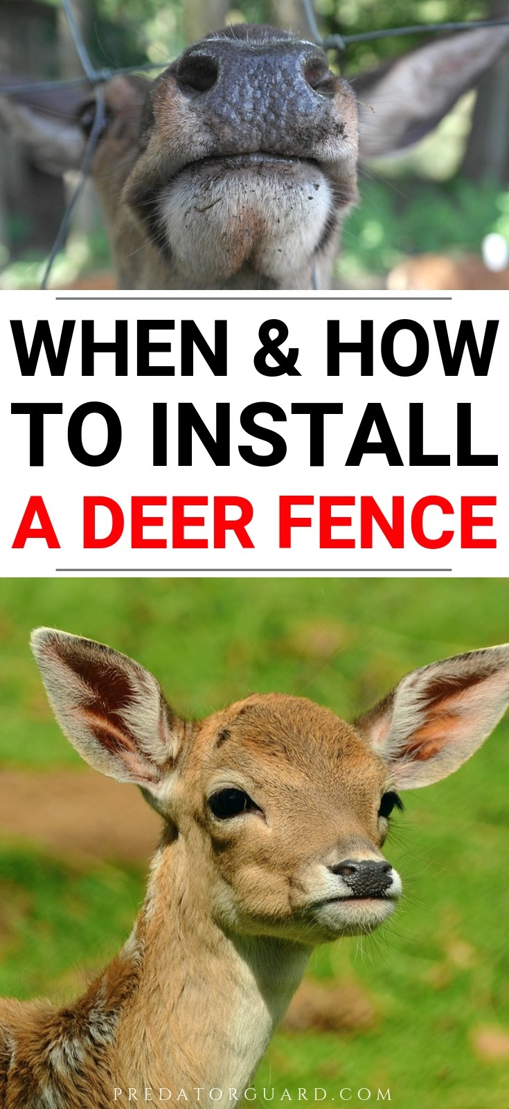 When-How-To-Install-A-Deer-Fence