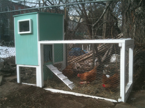 Secure-Your-Chicken-Coop