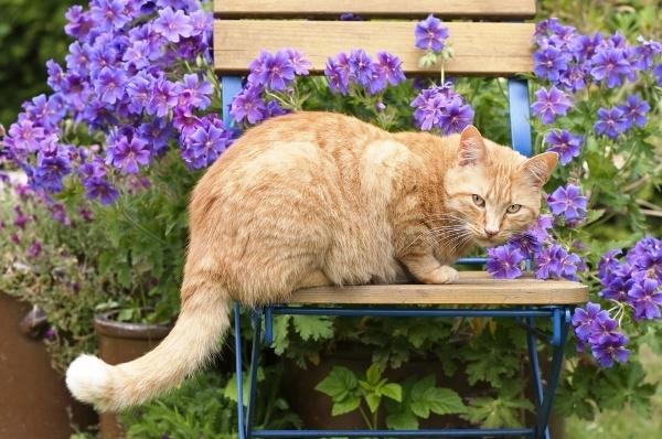 Cat-Garden