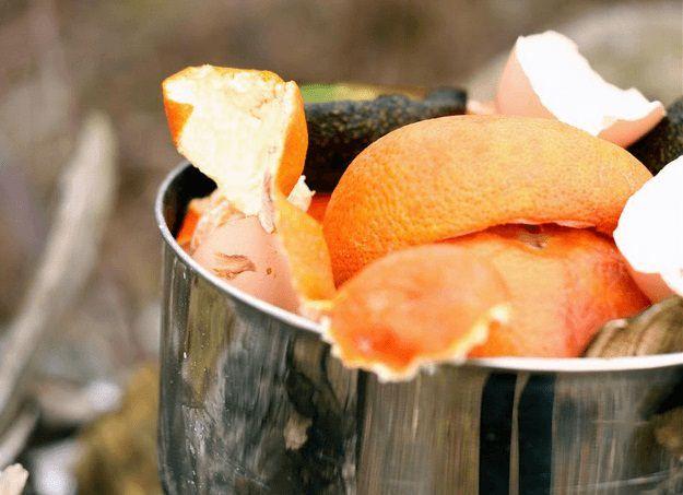 Citrus-Peels-In-The-Garden