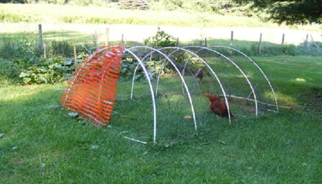 How-To-Protect-Chickens-From-Hawks-Safety-Shelter