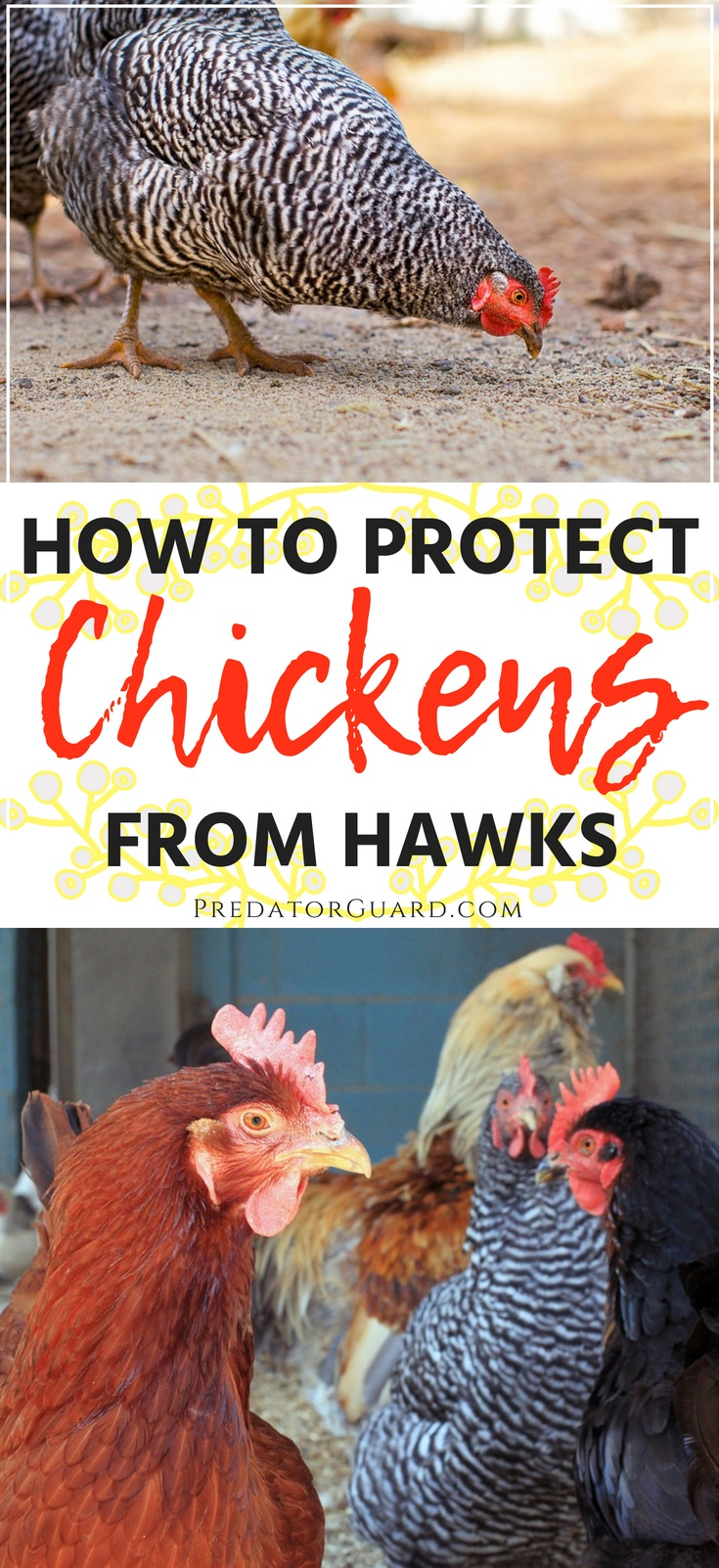 How-To-Protect-Chickens-From-Hawks-Predator-Guard
