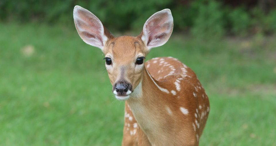 How-To-Keep-Deer-Out-960x510