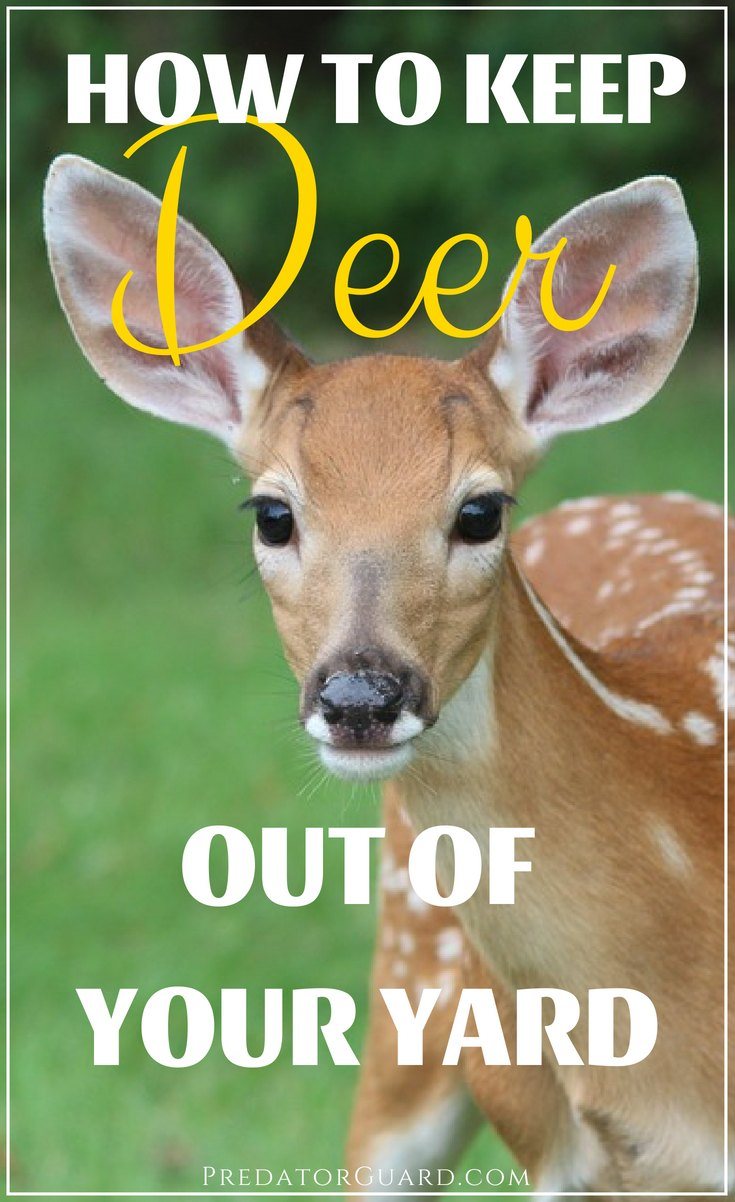 How-To-Keep-Deer-Out-of-Your-Yard