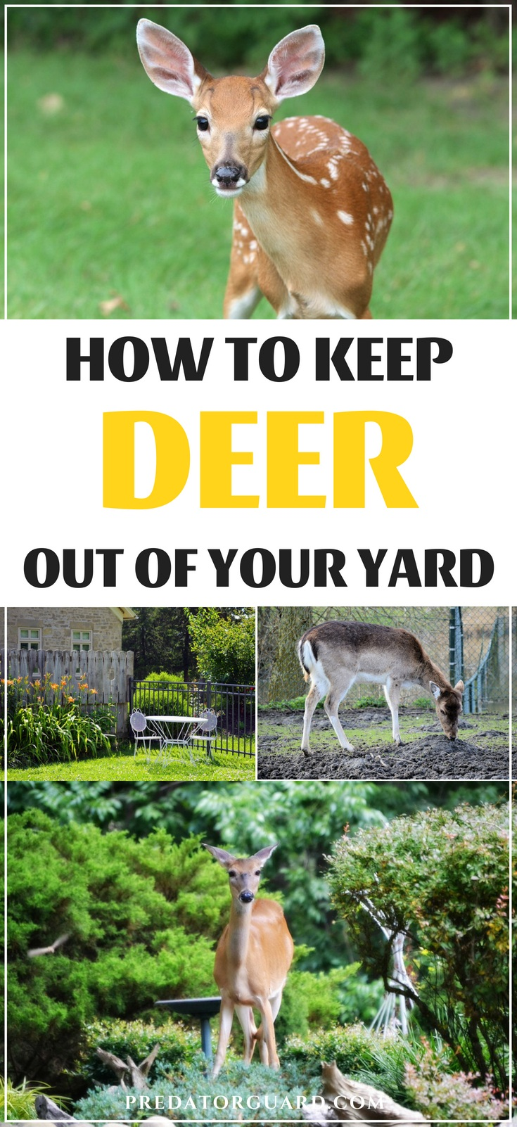 How-To-Keep-Deer-Out-of-Your-Yard-Predator-Guard