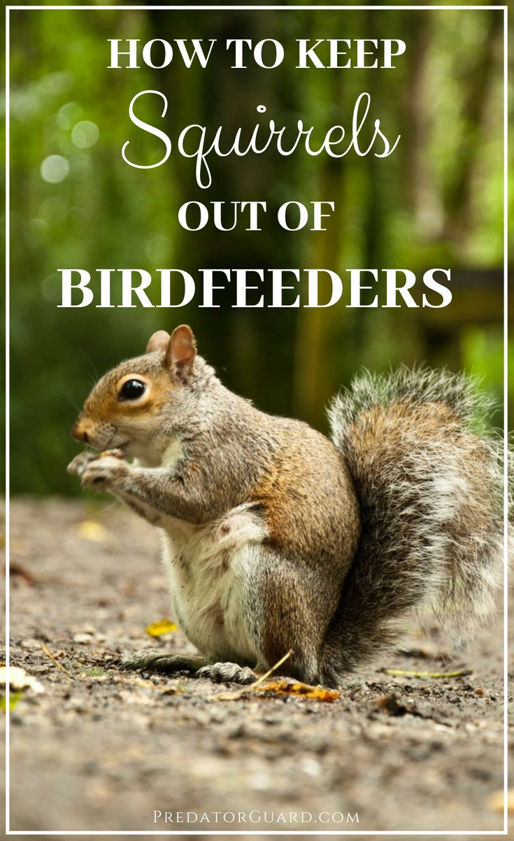 How-To-Keep-Squirrels-Out-of-Birdfeeders