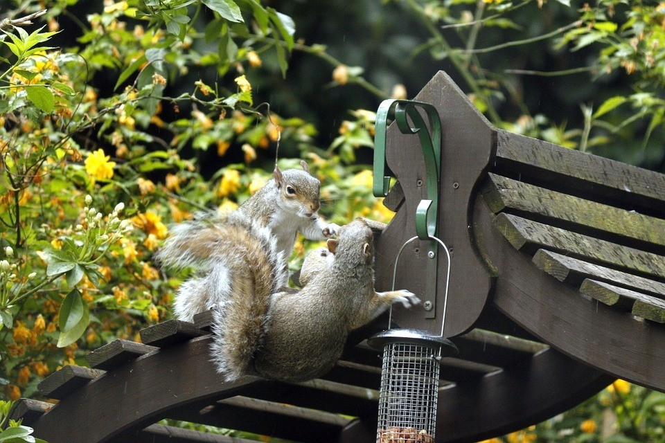 How-To-Keep-Squirrels-Out-of-Birdfeeders-3