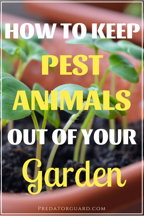 How-To-Keep-Pest-Animals-Out-Of-Your-Garden-480x720