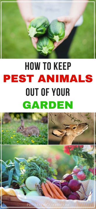How-To-Keep-Pest-Animals-Out-of-Your-Garden-Gardening-Tips-For-Beginners-330x720