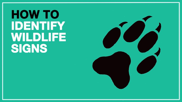 How-To-Identify-Signs-of-Wild-Animals-Featured