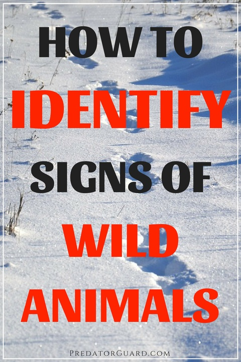How-To-Identify-Signs-of-Wild-Animals-480x720