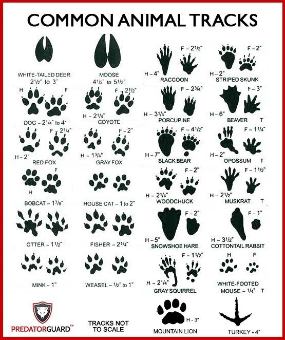 Identify-Signs-of-Wild-Animals