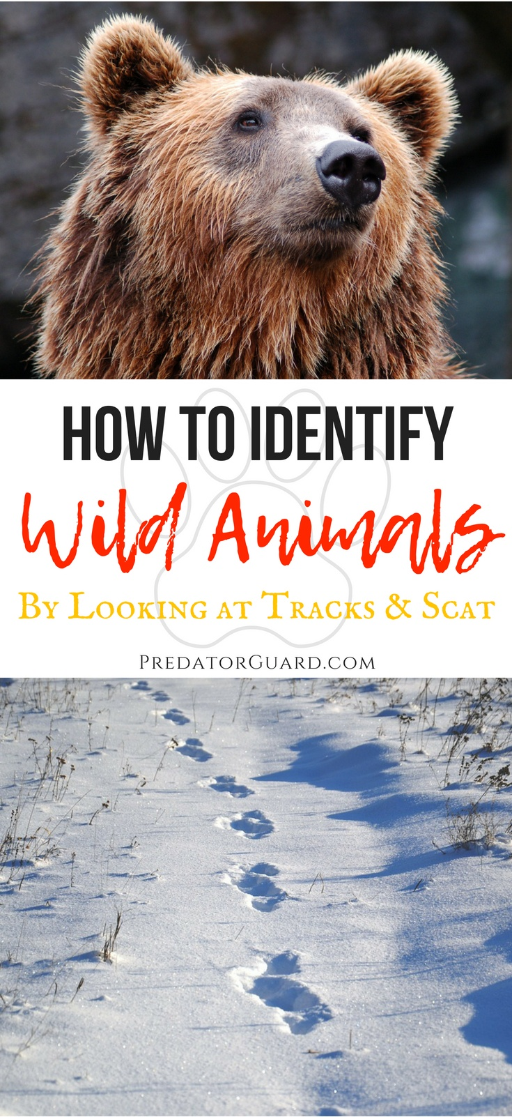 How-To-Identify-Wild-Animals-By-Tracks-and-Scat