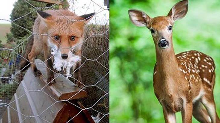 fox-deer-panelsx2_largeo720