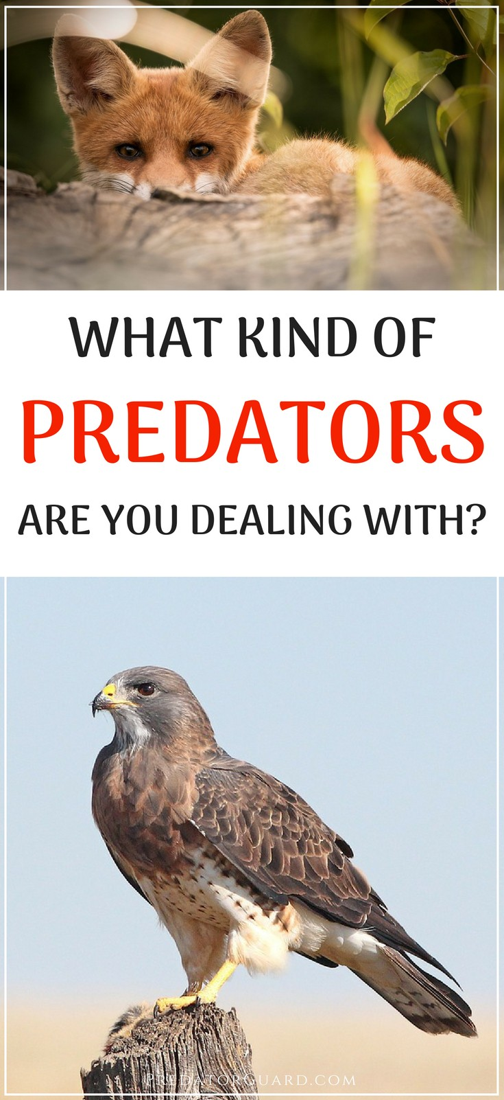 What-Kind-of-Predators-Are-You-Dealing-With-On-Your-Farm