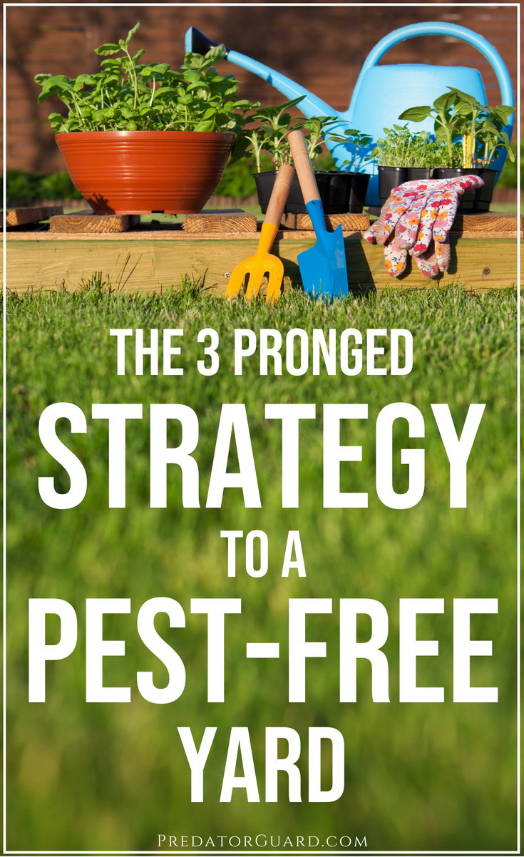The-3-Pronged-Strategy-To-A-Pest-Free-Yard