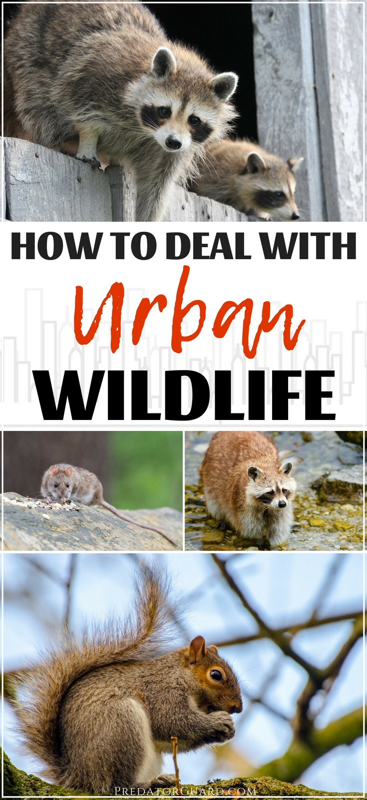 How-To-Deal-With-Urban-Wildlife-Predator-Guard