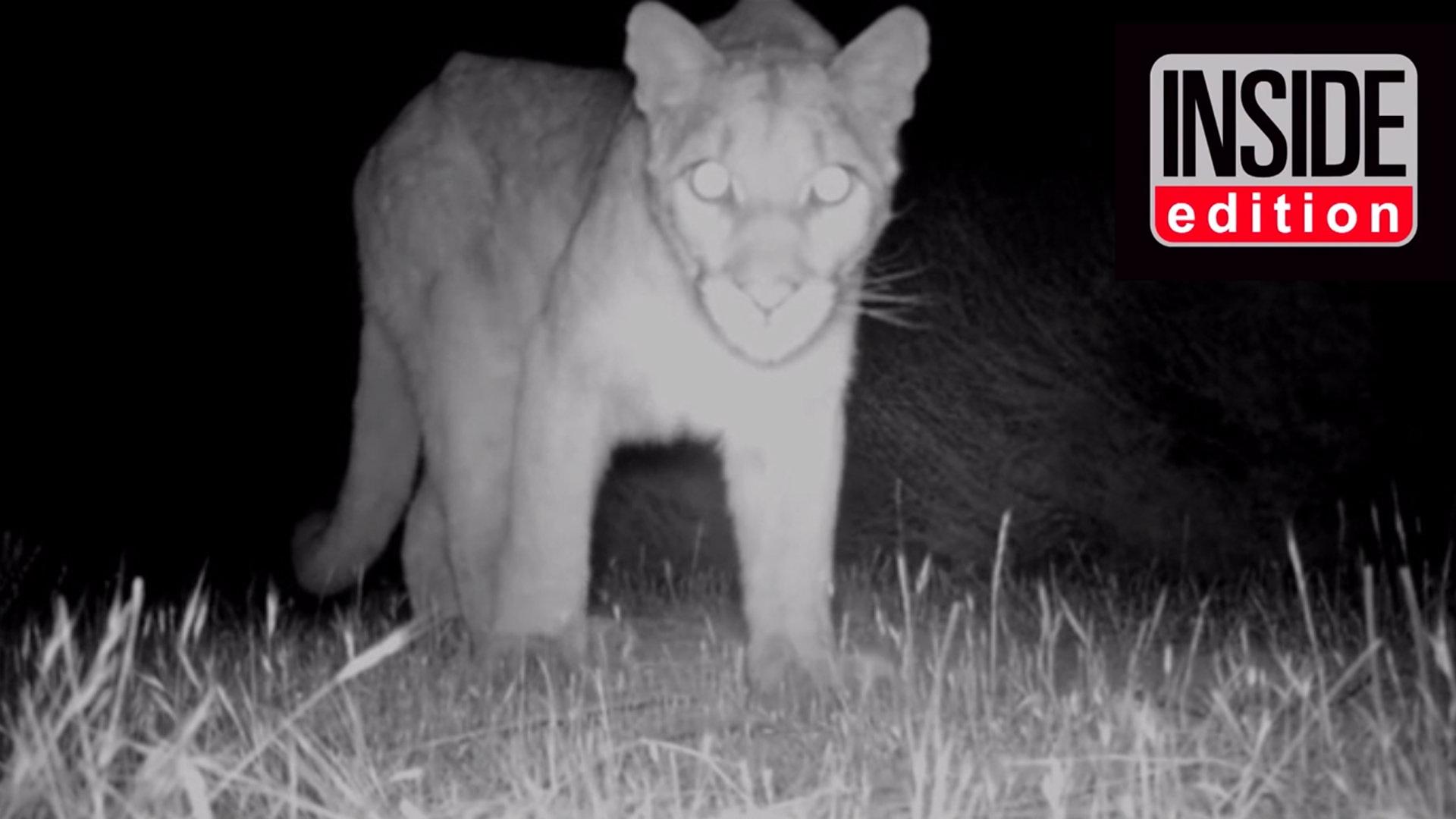 mountain-lion-video-image-no-title