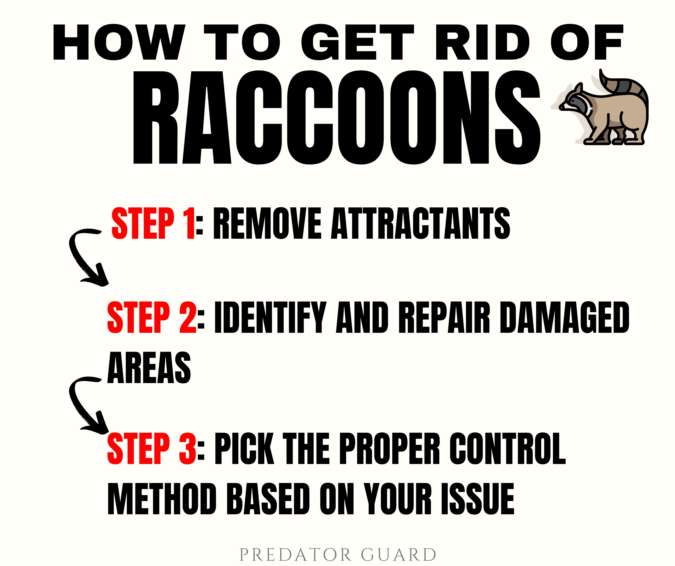 How to Get Rid of Raccoons Infographic